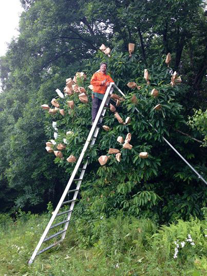 pollinating-in-tn