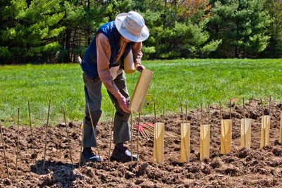 Charlie Hudson working in a chestnut seed orchard (PCCA credit).