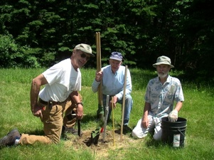 Maine Chapter members planting chestnuts.