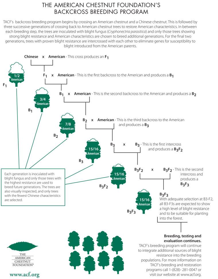 bckcross_breeding_chart_8_2012