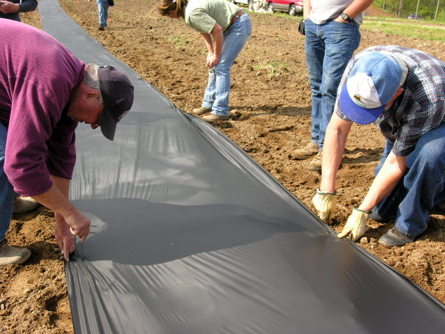 Planting a Seed Orchard at the Pryor Farm 4   The American Chestnut