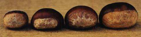 4_species_nuts_side