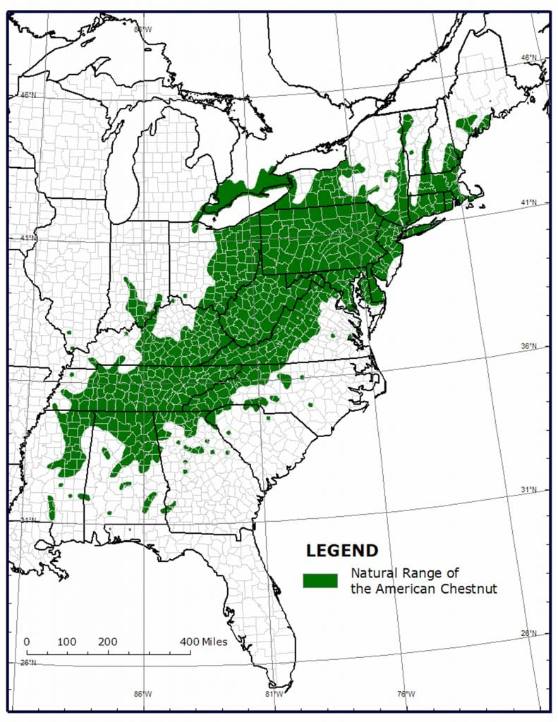 Native range of the American chestnut tree (castanea dentata)