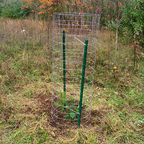 A freshly planted sapling is surrounded by a cage to deter predators.