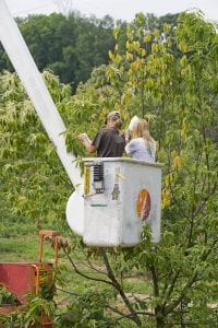 Controlled chestnut pollination, Meadowview Research Farms, VA